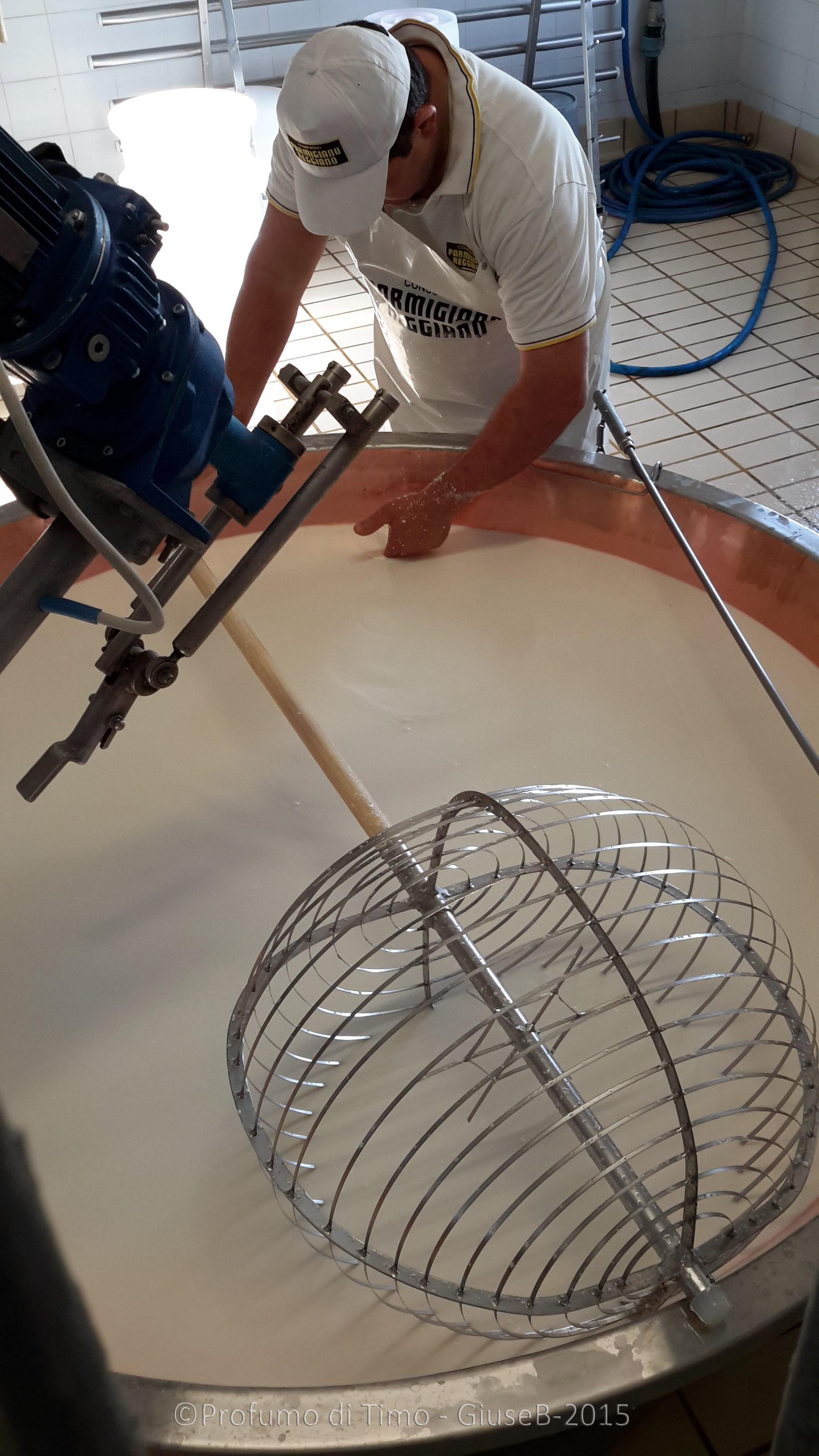 Parmigiano Reggiano Caseificio Sociale Coduro rottura della cagliata
