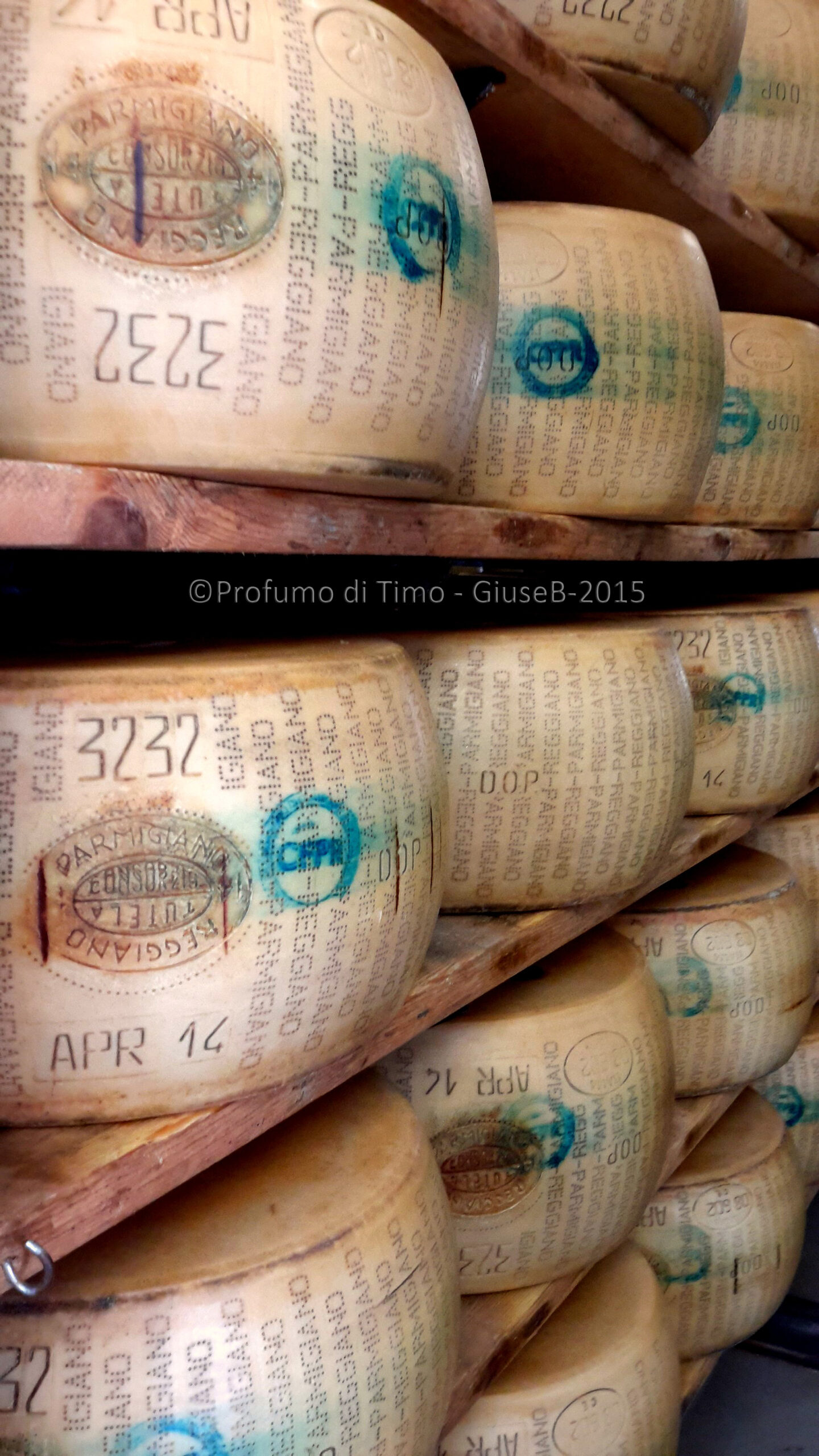 FACCIA PIATTA & SCALZO APPENA CONVESSO. Alla scoperta del Parmigiano Reggiano – Anteprima #caseificiaperti 2015