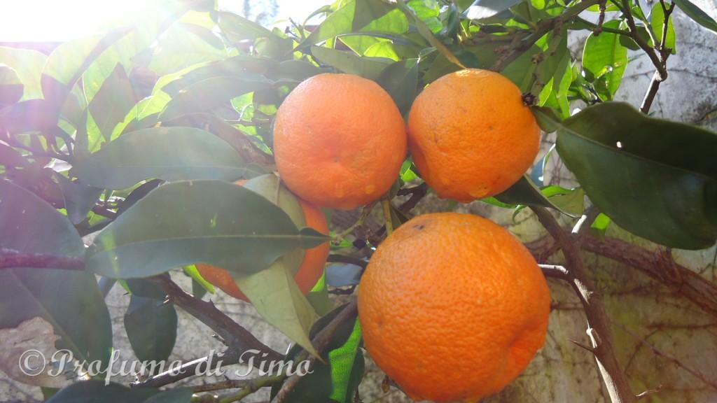 arance di Toscana (7)