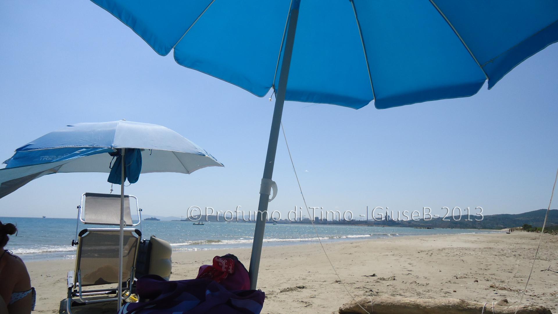 conchiglie mare spiaggia (3)
