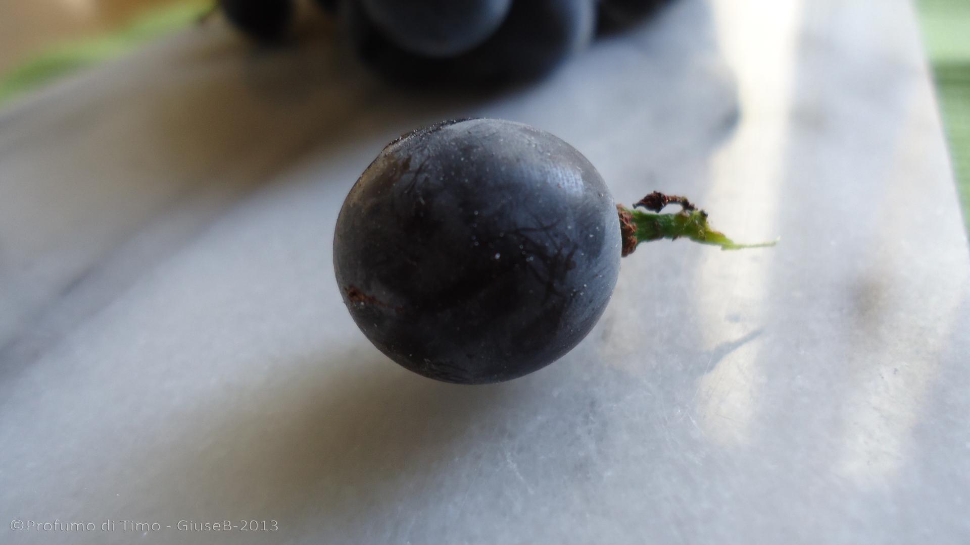uva fragola1