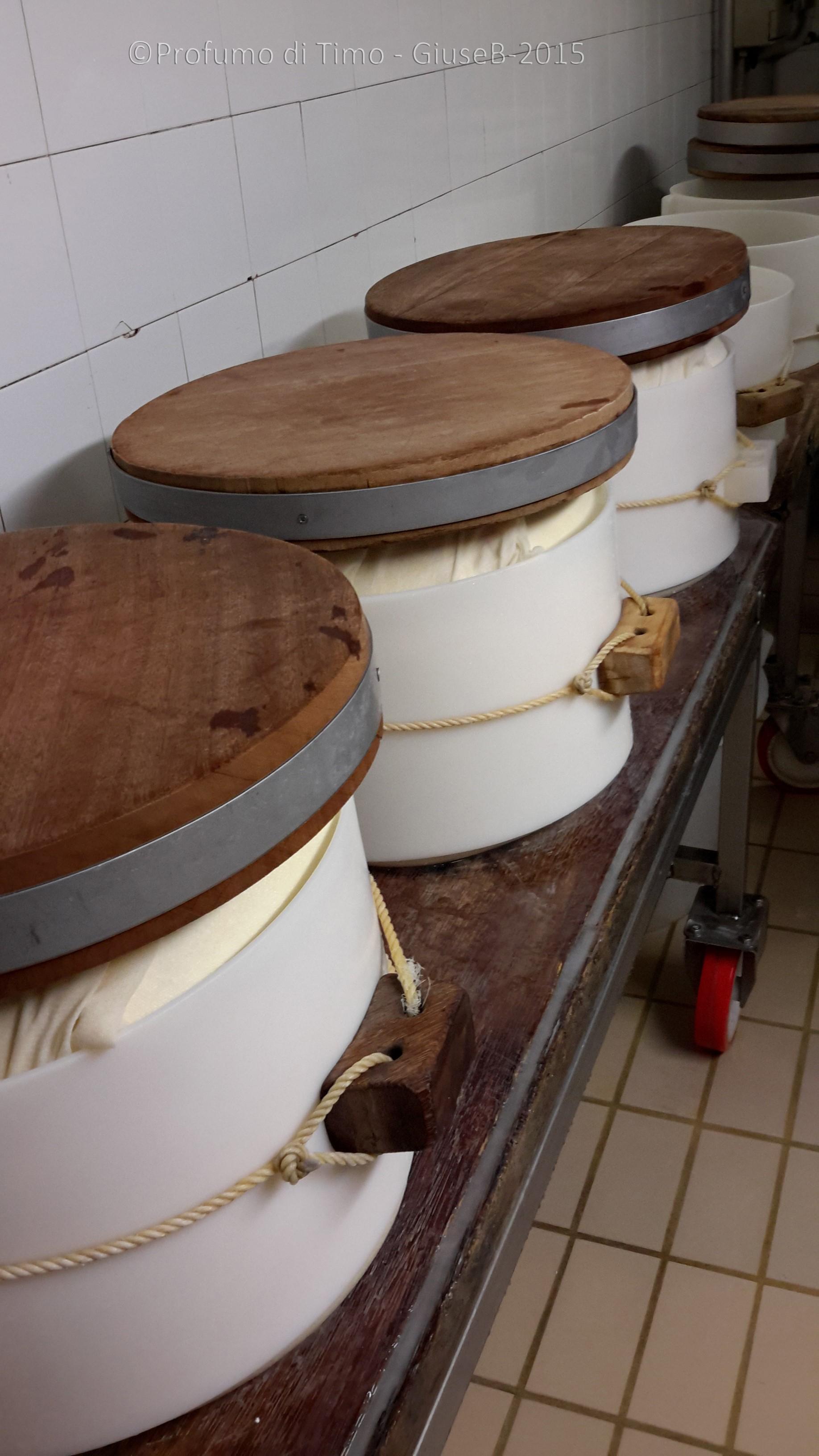 Parmigiano Reggiano Caseificio Sociale Coduro formatura
