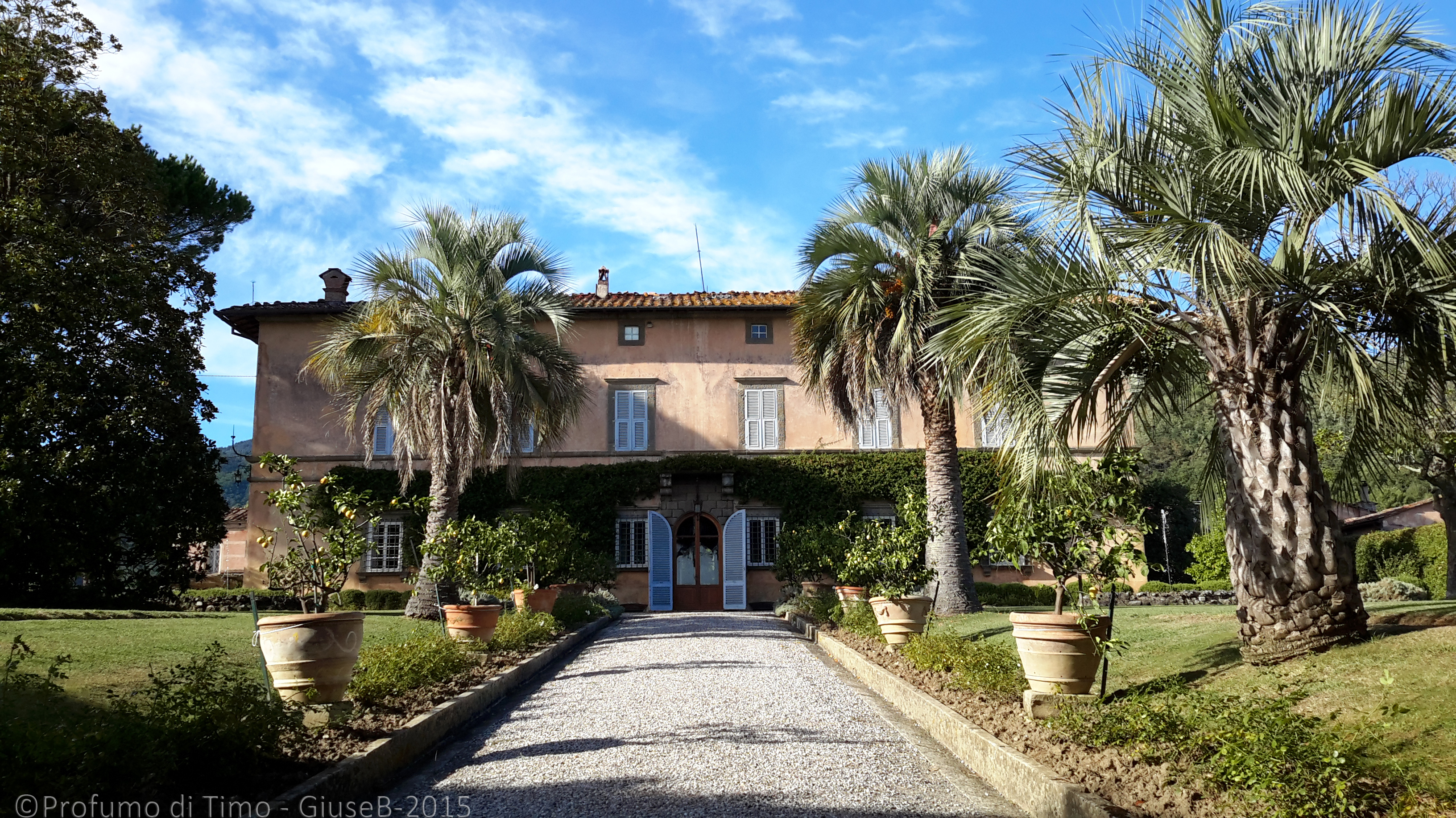 Vendemmia 2015 a Valgiano la Villa