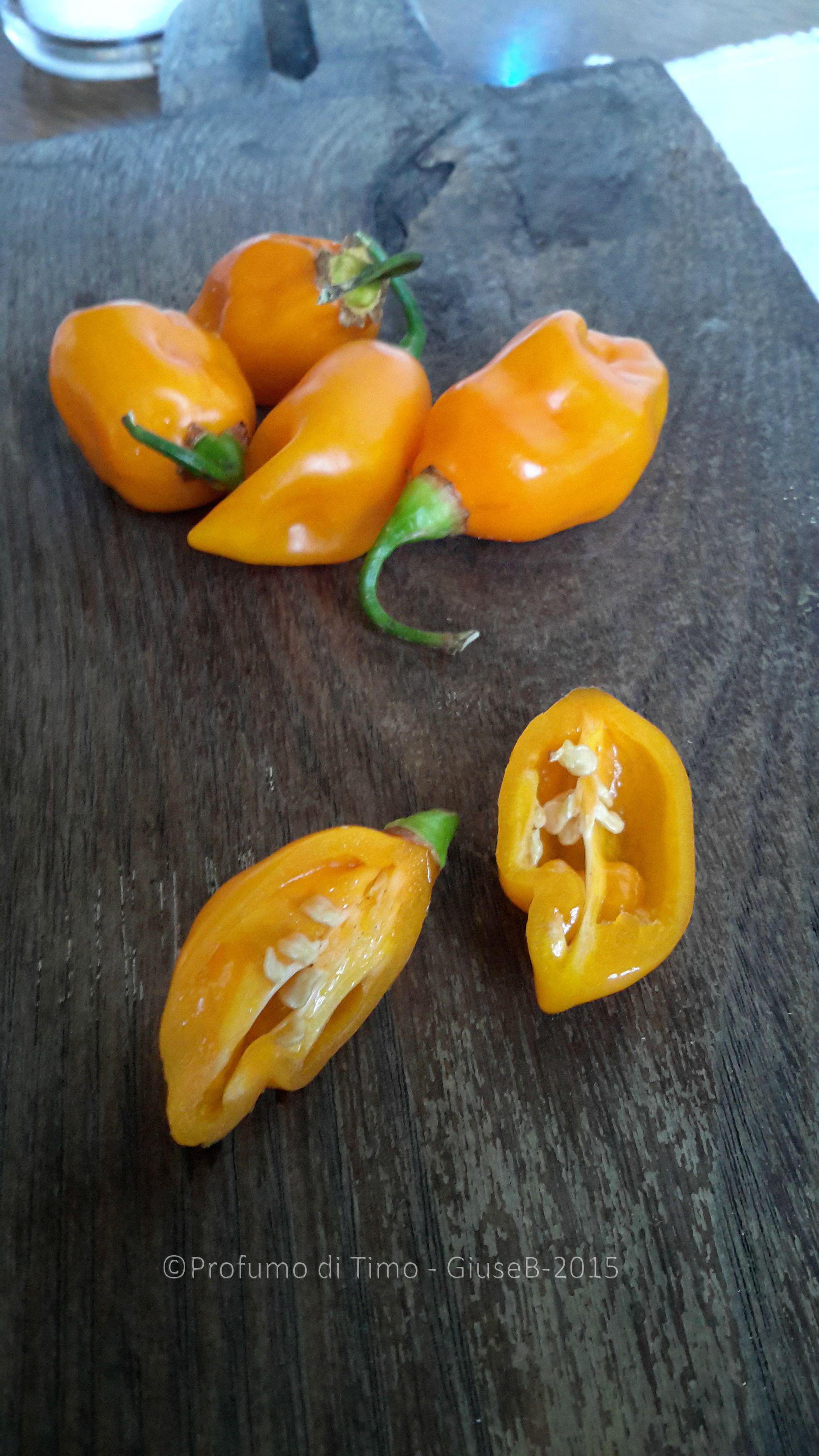 habanero giallo (29)