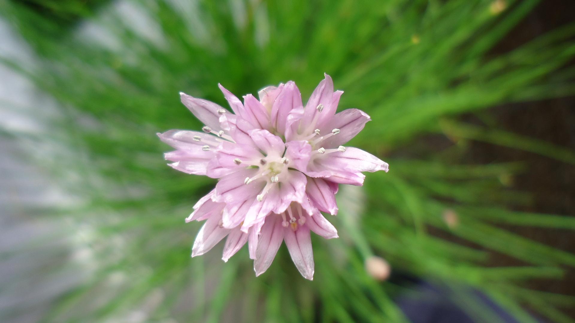 Robiola, erba cipollina e pepe bianco su pane rustico semi-integrale